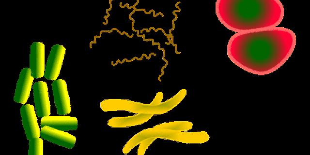 bacteria-1450088_640