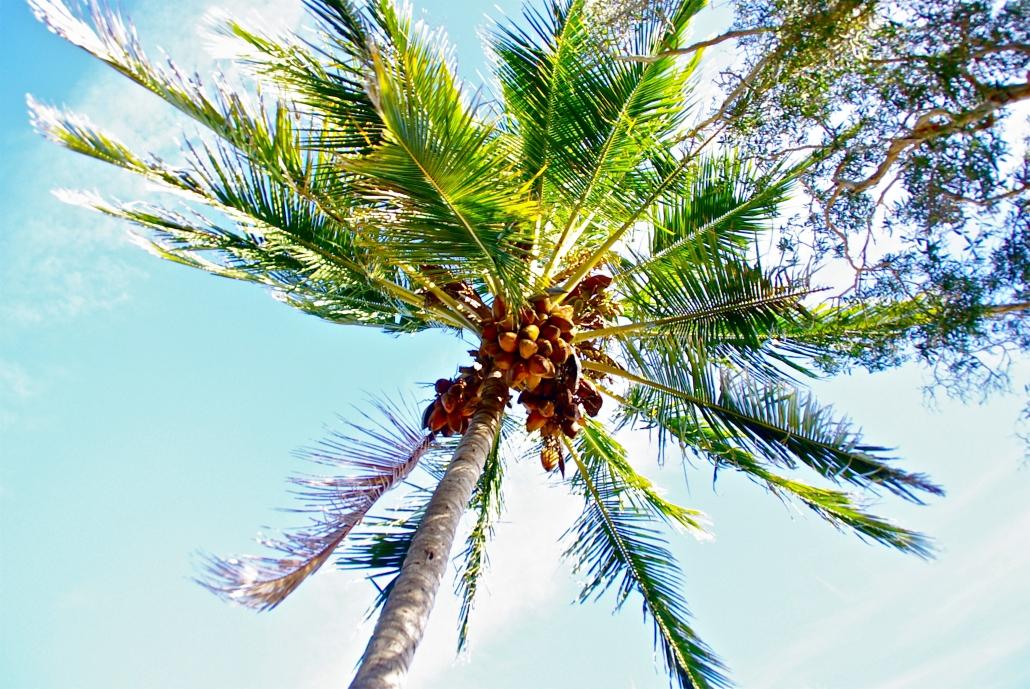 Weekend Wellness Tip: Coconut Oil Benefits